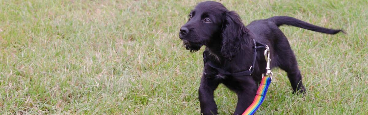 Puppy Home Start