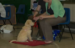 Puppy Classes