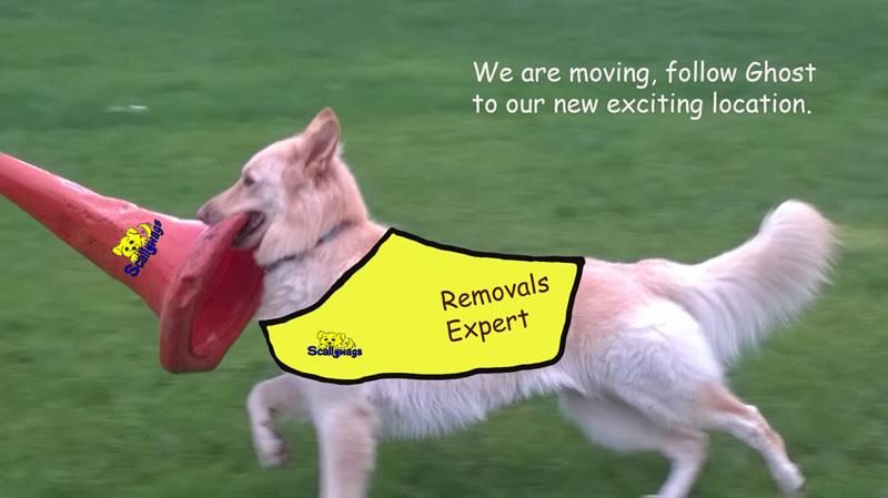 Removals Dog