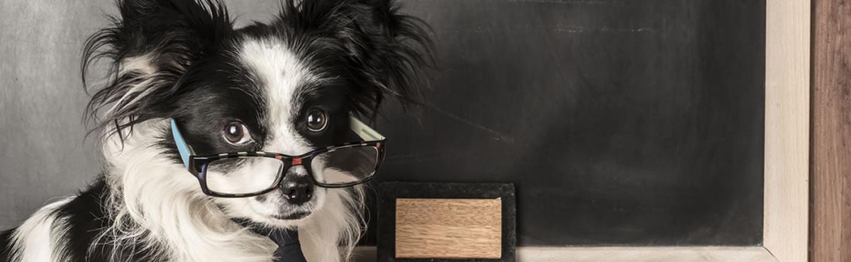 Dog Learning Zone